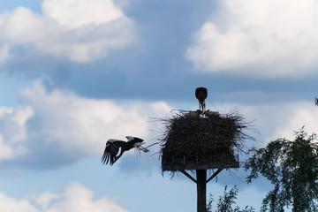 Storchenpaar, ein Storch im Nest, anderer Storch im Abflug