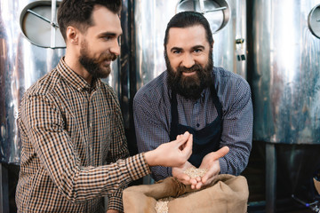 Two adult bearded men check quality of barley malt while in brewery. Process of beer manufacturing.