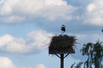 Storch steht in seinem Nest mit dem Rücken zum Fotograf und schaut nach rechts