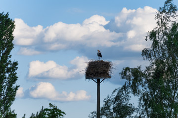 Klapperstorch im Nest unter bewölktem Himmel