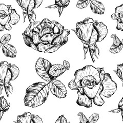 Seamless pattern of highly detailed hand drawn roses isolated on white background. Vector