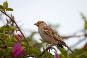 A female sparrow on the on the branch