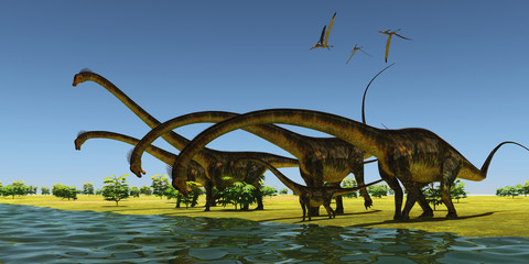 Jurassic Barosaurus Dinosaurs - A herd of Barosaurus dinosaurs bend their long necks to drink from a river as a flock of Pteranodons fly over.