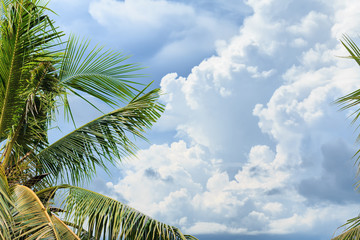 Exotic paradise. Coconut tree and blue sky. Luxury Nature Frame used for promoting ..travel or resort or used for wallpaper, copy space for text. Green Natural.
