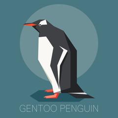 Flat gentoo penguin