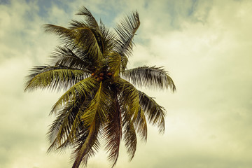 beautiful tropical background with  coconut palm tree, toning