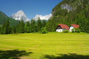 A mountain meadow with peaks on background, Totes Gebirge, Austria