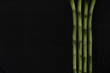 Bamboo stalks (Bamboo) covered with drops of water on a black background