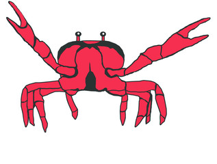 Red crab illustration