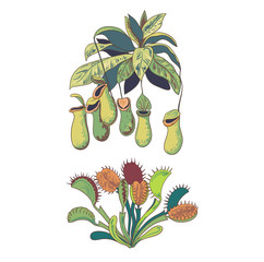 Set of carnivorus plants, venus flytrap and nepenthes