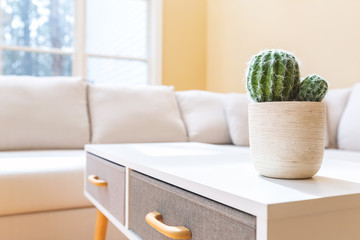 Potted cactus in a large luxury interior home