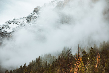 Fog over mountain with pine tree forest
