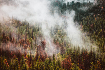 Scenic view of fog over trees in the forest