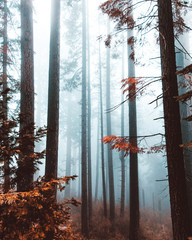 Abstract Foggy Forest 2