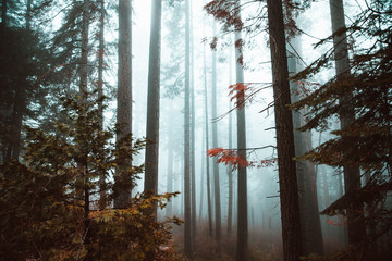 Abstract Foggy Forest