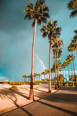 Palm Trees and Rainbow 2