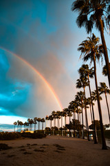 Scenic view of palm trees against rainbow