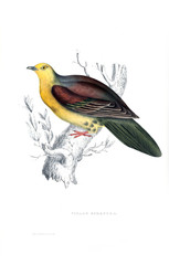 Illustration of a bird