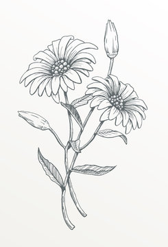 Two Hand Drawn Daisies