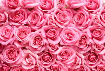 ピンクの薔薇の背景素材