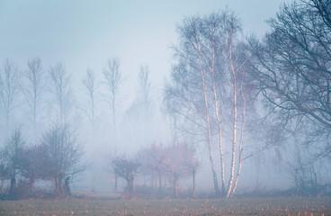 Winter birch tree lit by morning sunlight in misty countryside.