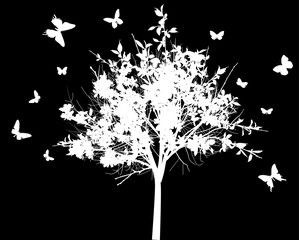 blossoming white tree and butterflies isolated on black