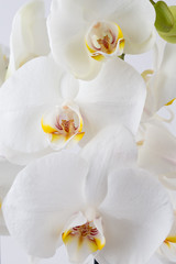 Beauty orchid on a white background.