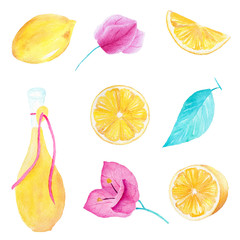 Hand drawn watercolor set of lemon, olive oil, leaf and bouganvillea flower on white background. Can be used for printing and decoration.