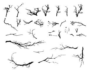 Set of branches of a tree