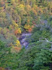 紅葉のアルプスと川の風景