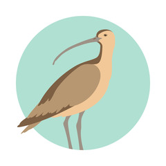 curlew bird vector illustration flat style profile