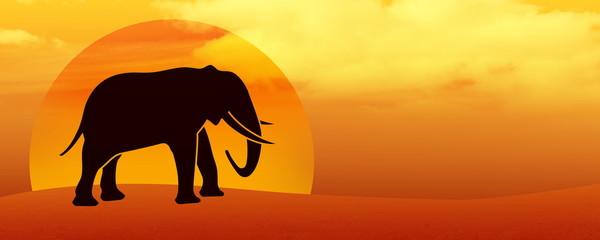 elephant silhouette in the desert at sunset