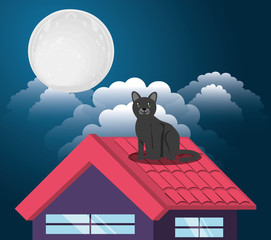 Cat under the light of the moon in the roof