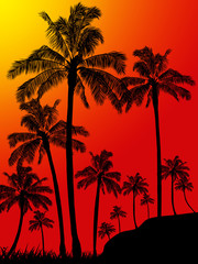 Palm trees forest portrait background