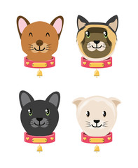 group of domestic cats