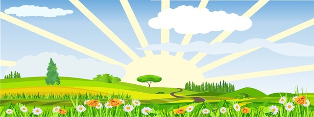 Countryside vector illustration, blowing flowers on meadow, rising sun, outdoor concept, nature landscape