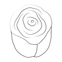 line beautiful rose with nature petals decoration