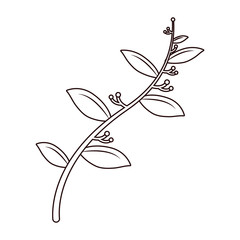line nature leaves with flowers plant branch