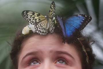 Freya Gordon, aged 10, poses for a photograph with a butterfly during an event to launch the Sensational Butterflies exhibition at the Natural History Museum in London