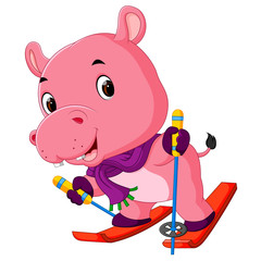 hippo playing skiing