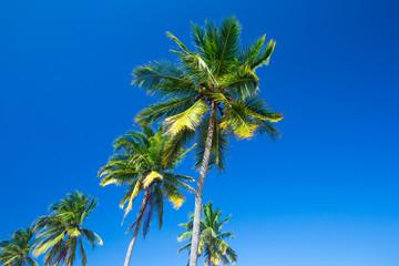 Palm trees against blue sky, Palm trees at tropical coast