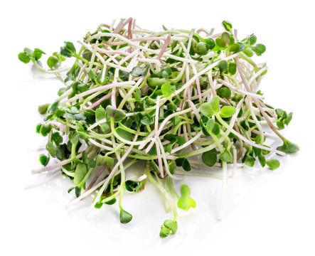 Young sprout microgreen isolated with shadow. Clipping path.