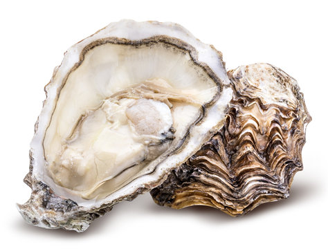 Fresh oyster isolated with shadow. Clipping path.