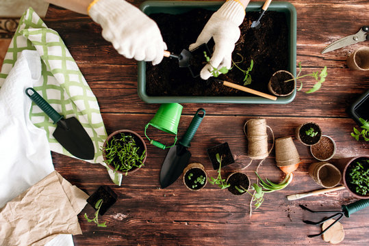 Female hands planting seedlings at home holding garden tools. Hands of girls and little sprouts. Gardening. Flat lay