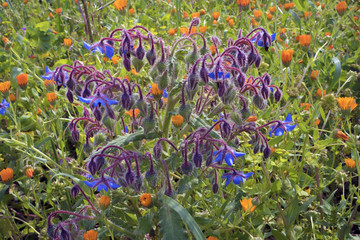 fairy flowers in the meadow