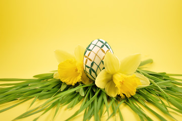 Easter egg with daffodils stock images. Yellow daffodils with grass on a yellow background. Easter decoration on a yellow background. Spring decoration images. Decorated egg with a flower