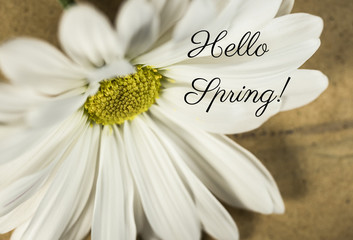 Close Up of White and Yellow Daisy with Hello Spring Text