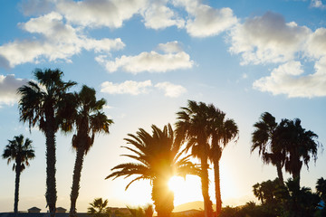 palm tree silhouettes against blue sky and sunset background