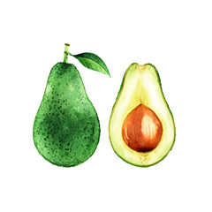 Isolated watercolor avocado on white background