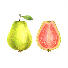 Isolated watercolor guava on white background